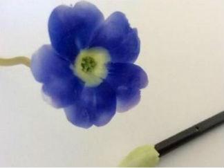 粘土花朵的手工制作教程图解