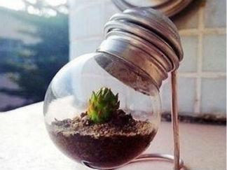 废旧灯泡变盆栽的废物利用的创意制作图解