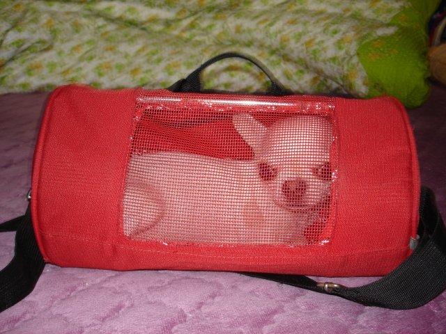 小狗外出包包巧的的废物利用的创意制作图