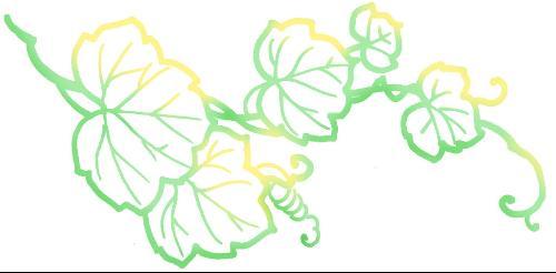 美丽黑板报花边图案-葫芦藤叶子图片