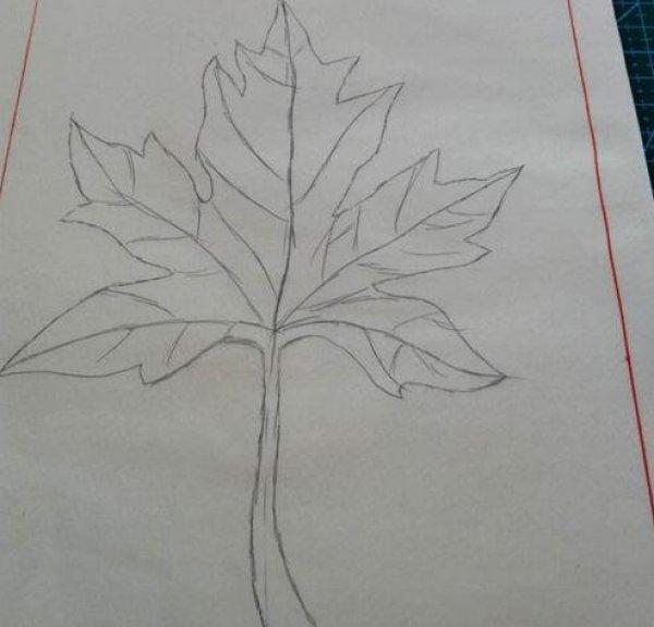 枫树风景铅笔画