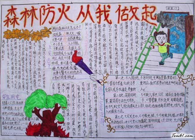 世界森林日手抄报版面设计图一