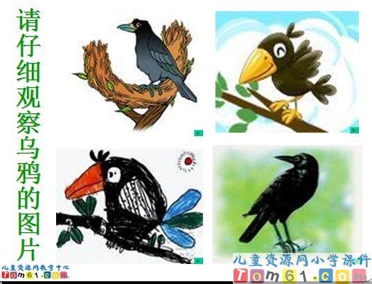 乌鸦喝水课件4图片