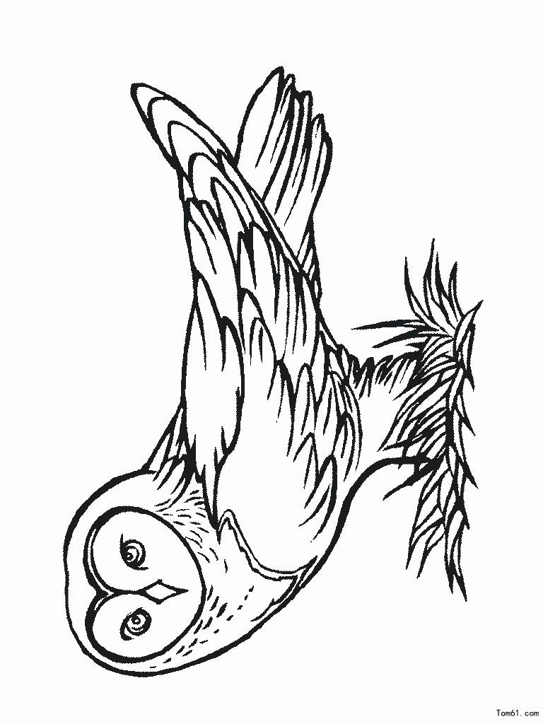 猫头鹰图片 简笔画图片 高清图片
