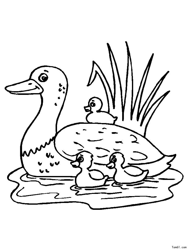 小鸭简笔画矢量图