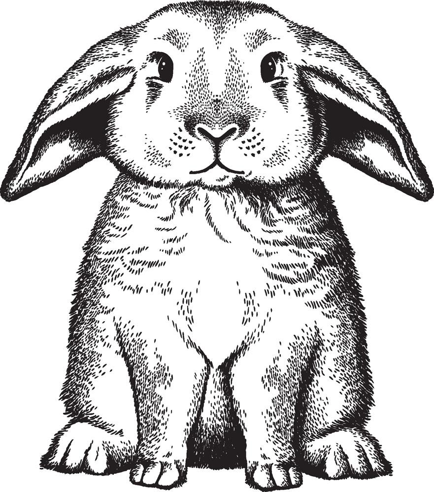 兔子-素描图集