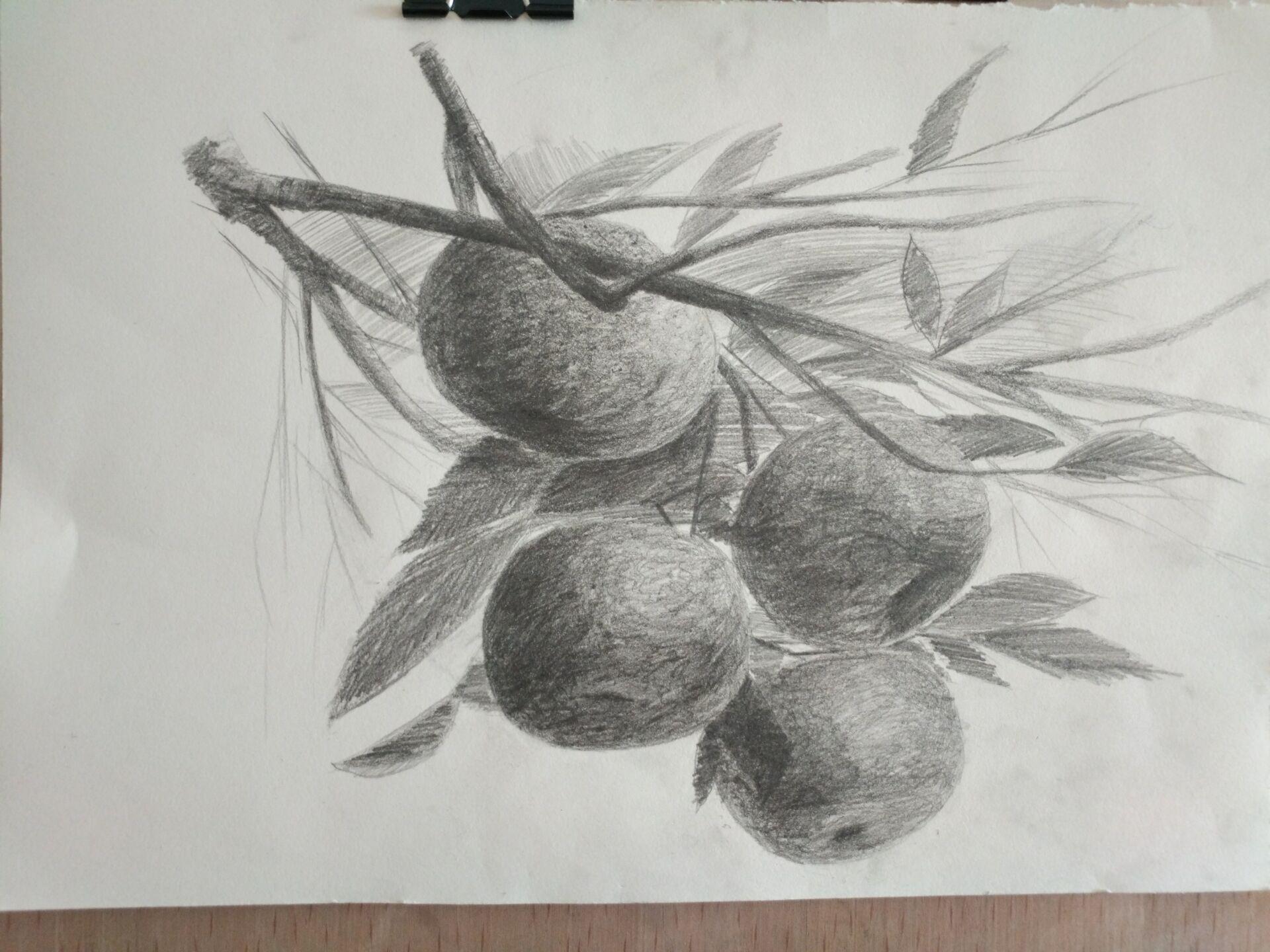 桔子-素描图集