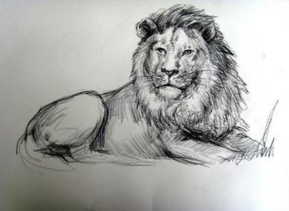 狮子-素描图集