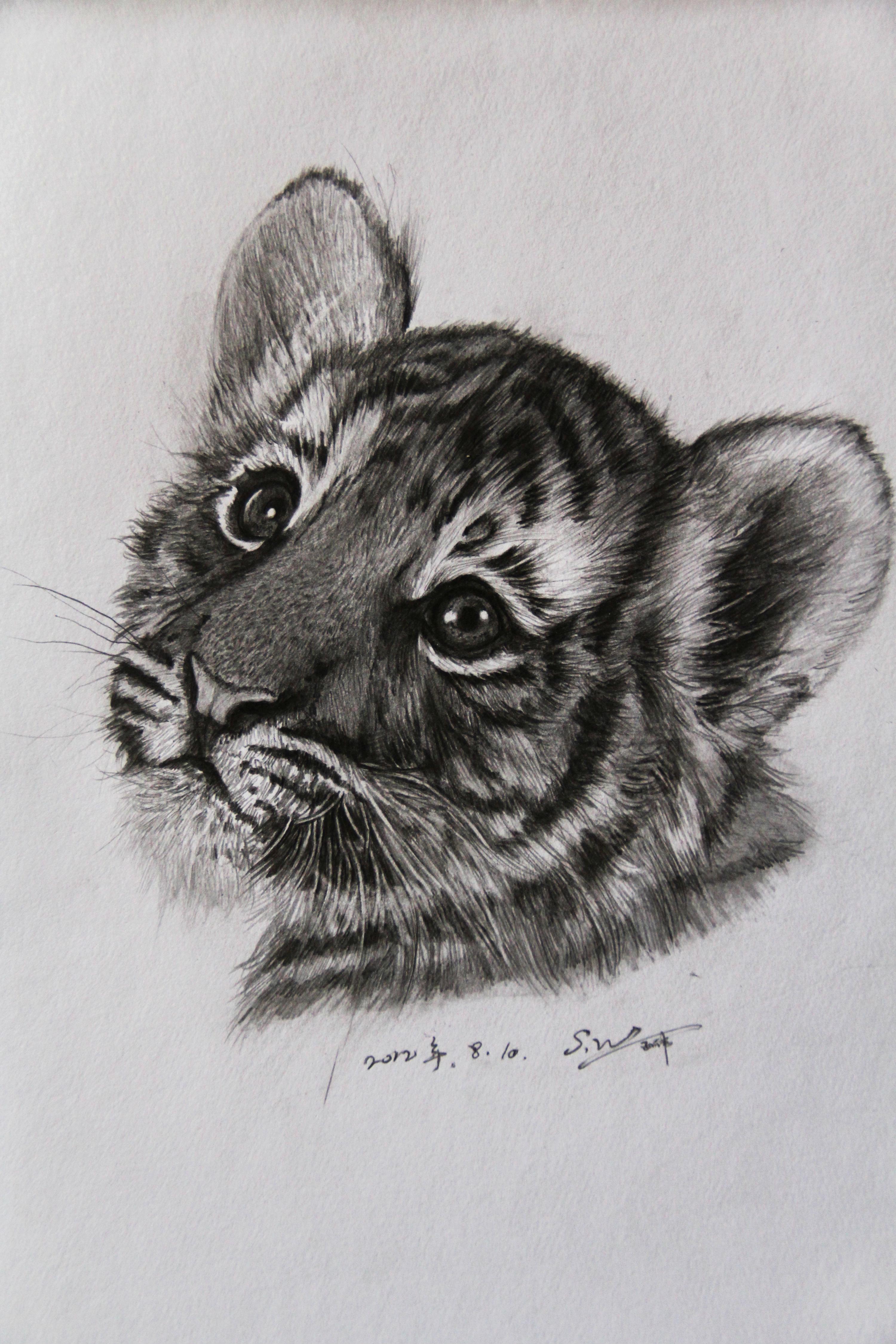 老虎-素描图集