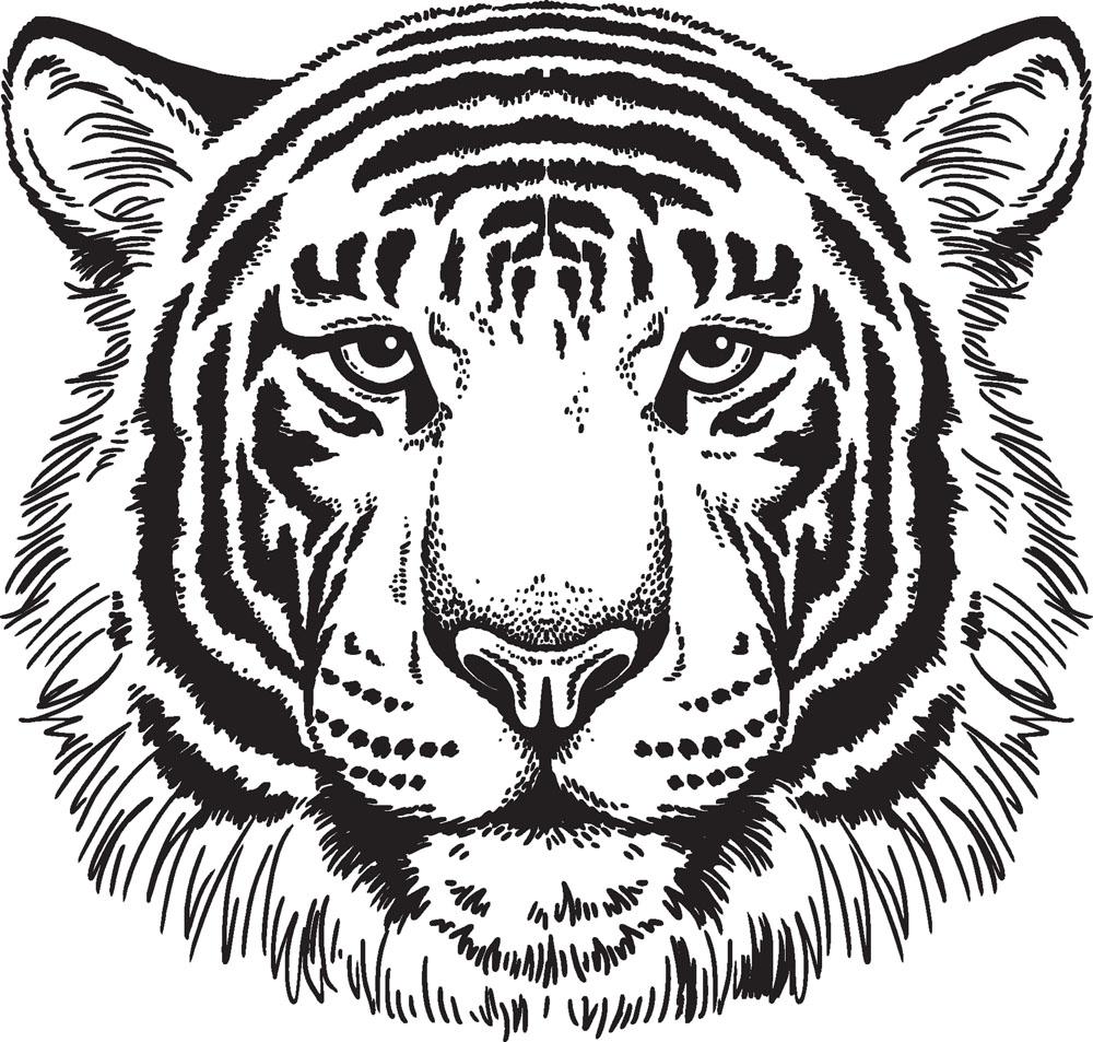 Line Drawing Of A Tiger S Face : 老虎 素描图集图片 儿童素描 少儿图库 中国儿童资源网