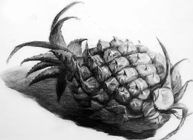 菠萝-素描图集