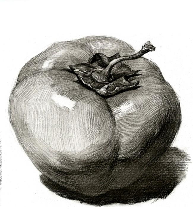 西红柿-素描图集