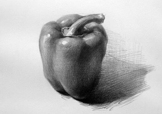 青椒-素描图集