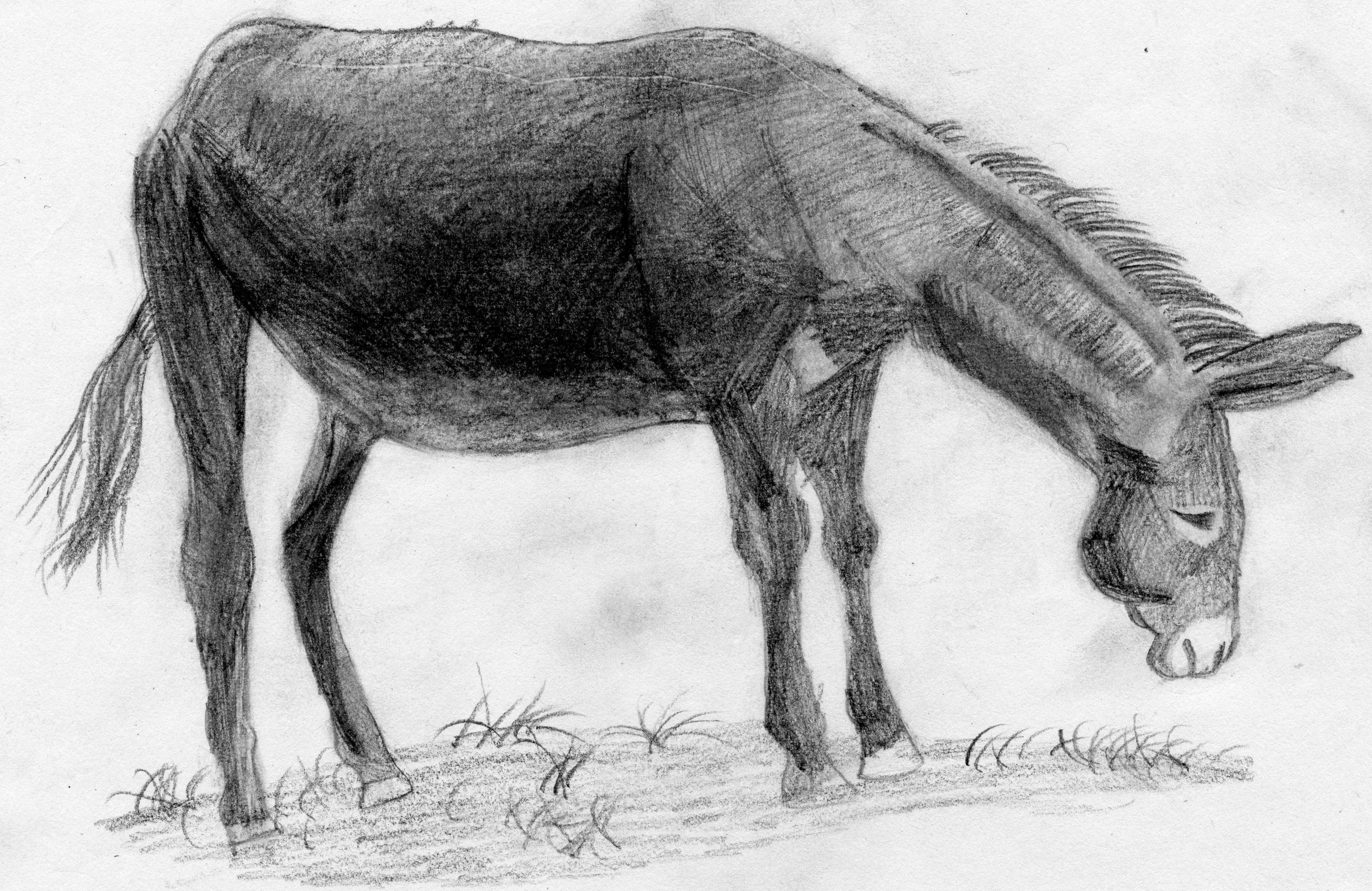 驴龙头怎么编步骤图片