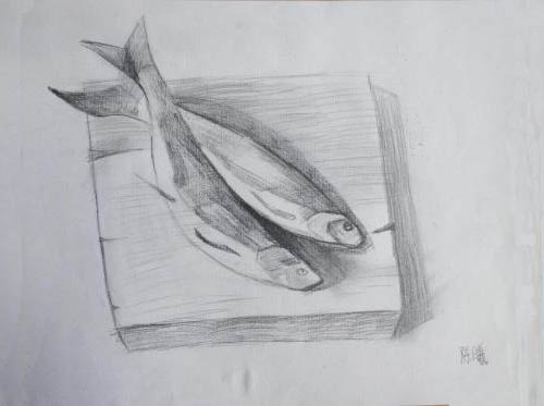 鱼-素描图集
