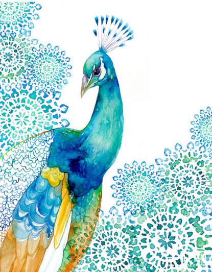 孔雀-水彩画图集