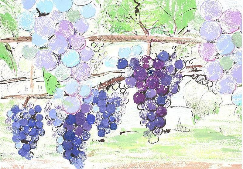 葡萄-蜡笔画图集2