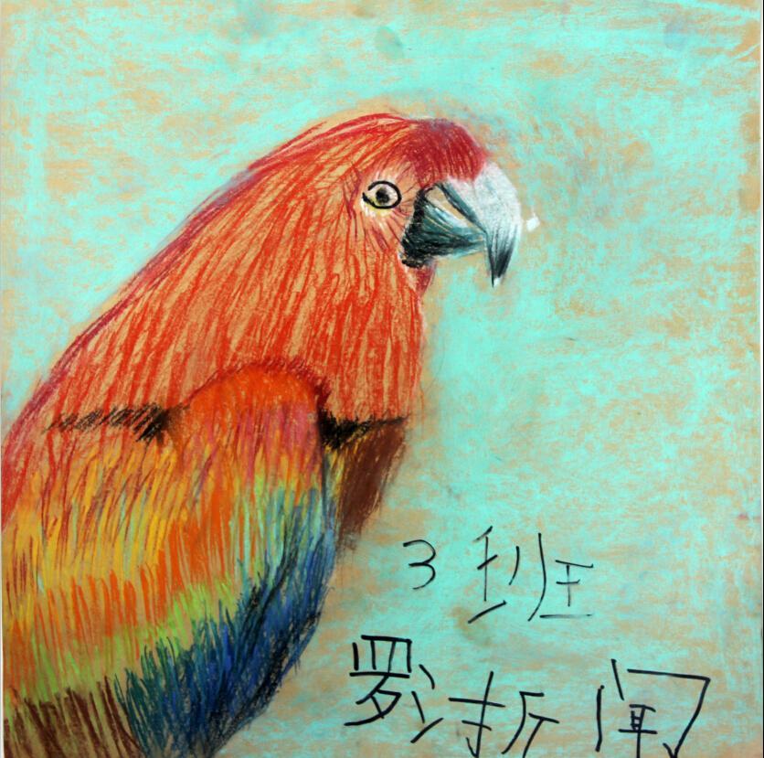鹦鹉蜡笔画图集1