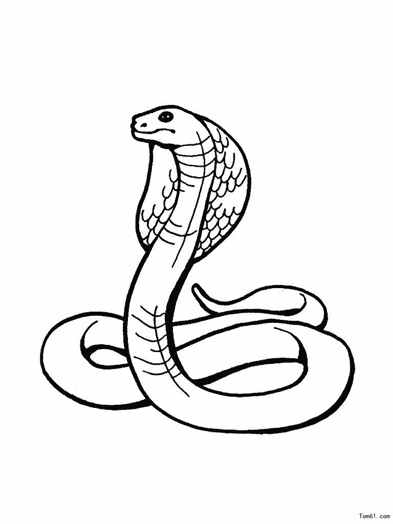 蛇图片_简笔画图片_少儿图库_中国儿童资源网
