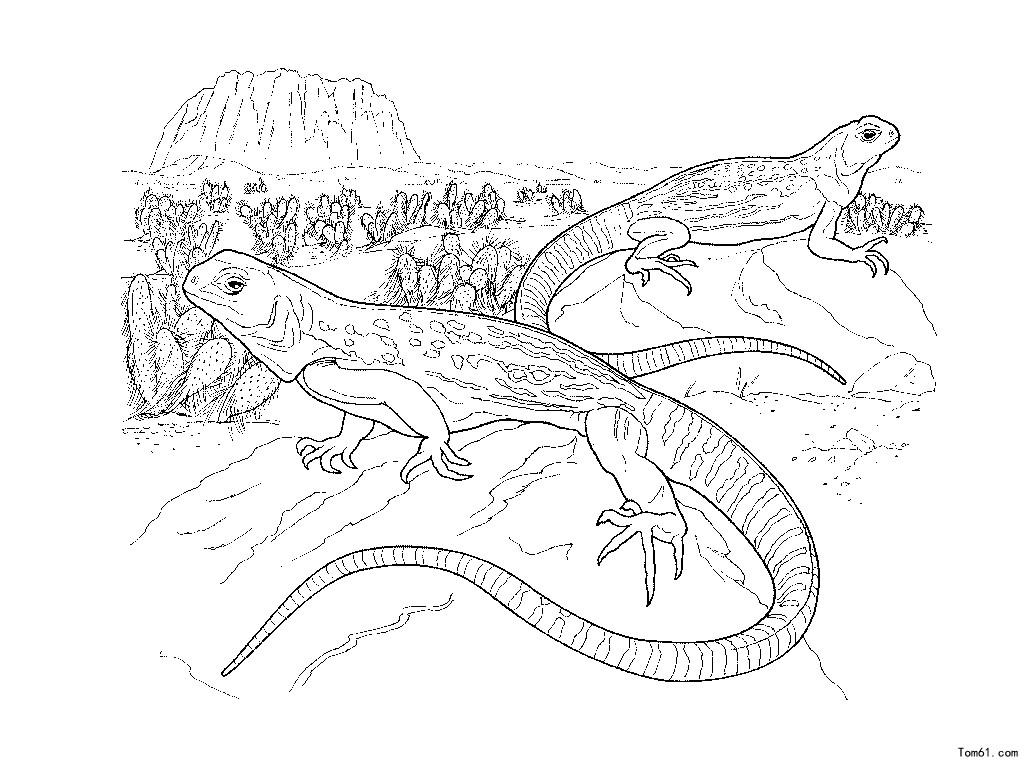 蜥蜴-简笔画图片-中国儿童资源网