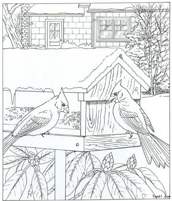 Valentine Coloring Pages furthermore Coloring Pages Of Cute Puppies To Print besides Cat Coloring Pages For Adults as well Rocket Ship Coloring Pages moreover Wolf Coloring Pages. on bird coloring pages for adults