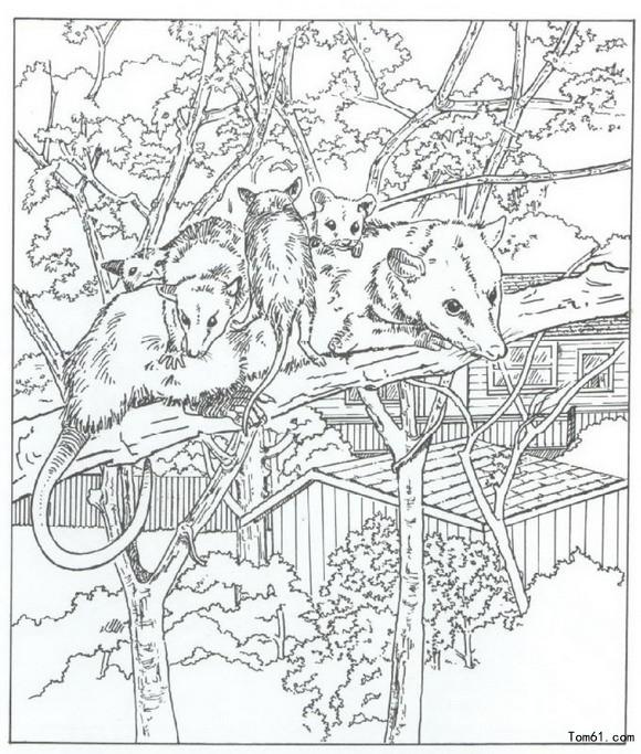 简笔画动物园图片 简笔画动物园图片下载