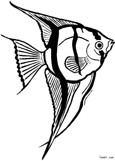 设计简笔画 步骤 鱼
