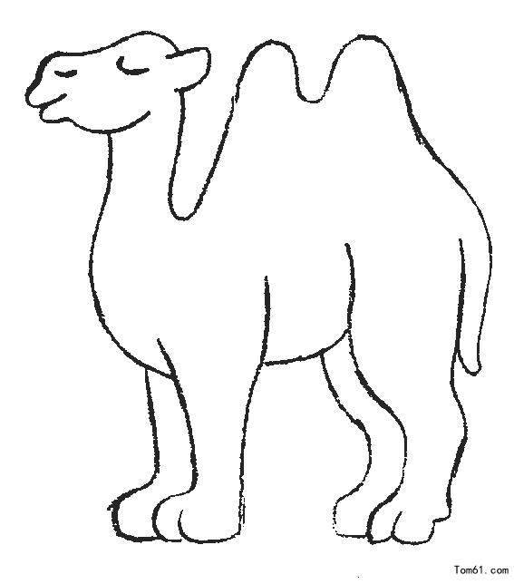 coloring pages camel face - photo#34