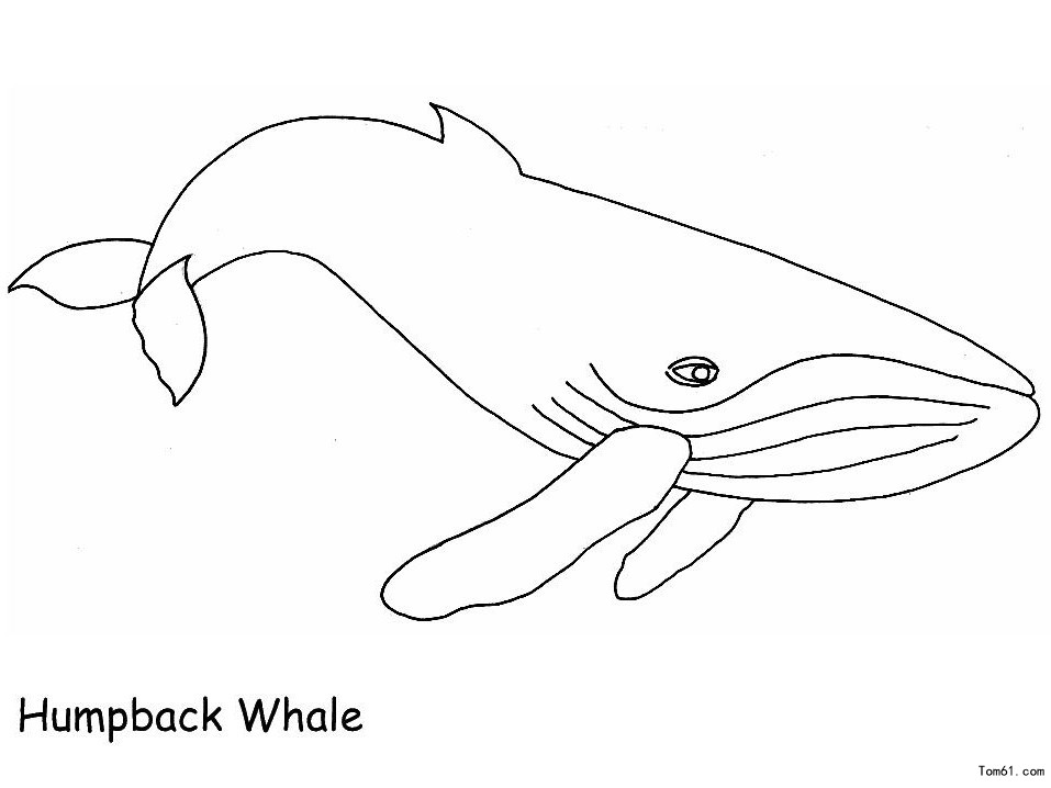 鲸鱼图片_简笔画图片_少儿图库_中国儿童资源网