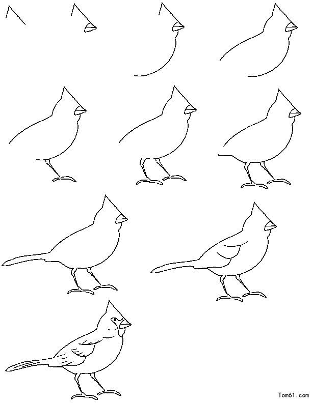 - Comment dessiner une colombe ...
