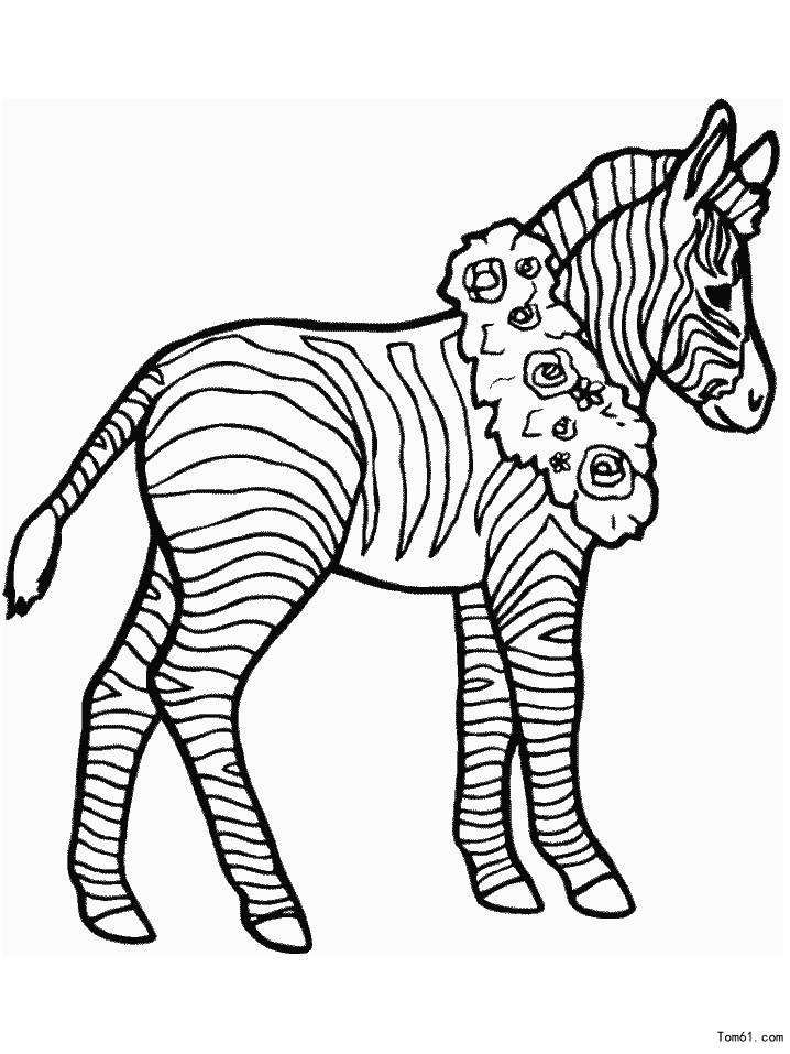 斑马正面手绘图