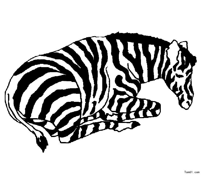 疯狂动物园薄荷斑马