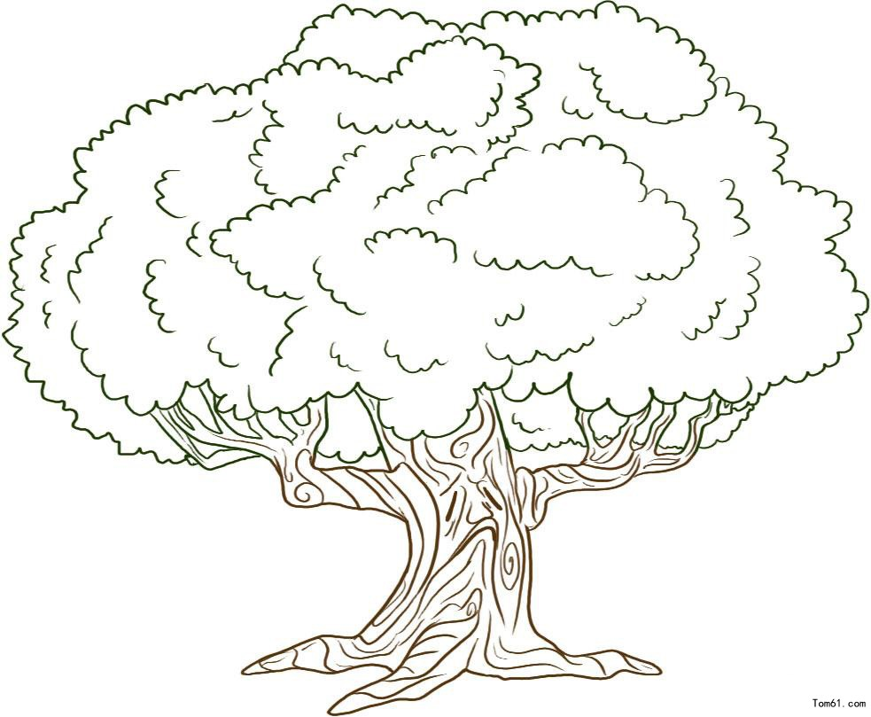pecan tree outline drawing related keywords pecan tree