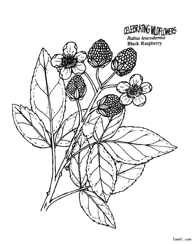 植物图片_简笔画图片_少儿图库_中国儿童资源网